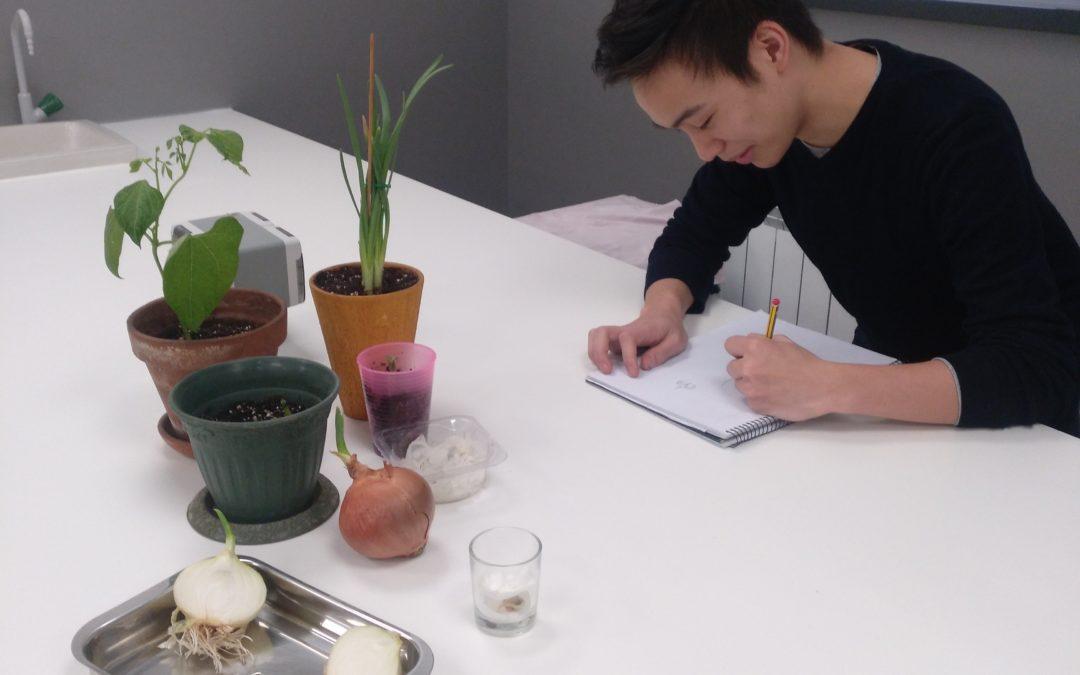 Prácticas de laboratorio con leguminosas