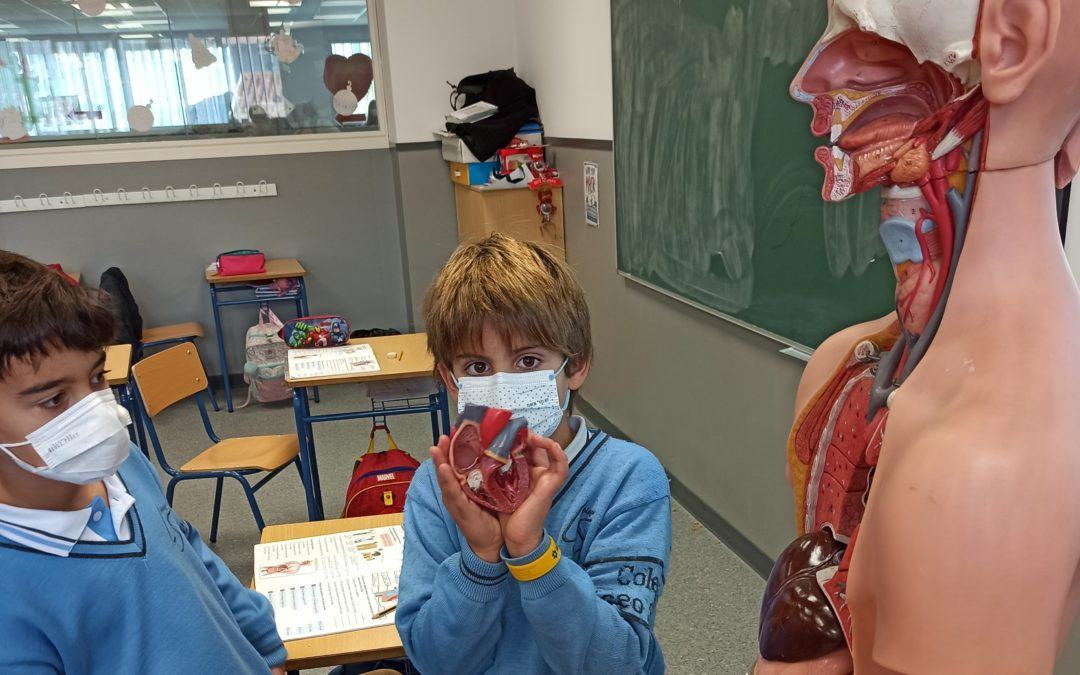 Taking a close look at the human body